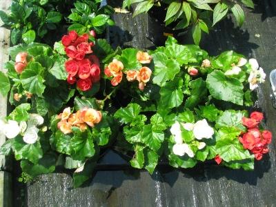 цветы, сад, цветы в горшках