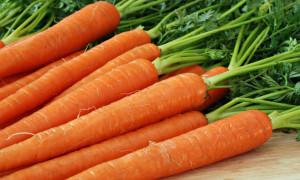Лечимся морковным маслом