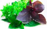 Специи и травы - источник здоровья