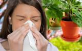 Как снизить риск возникновения аллергии на комнатные растения?