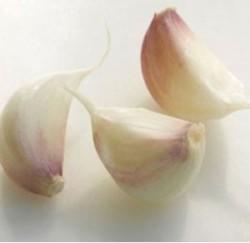 zubok-chesnoka-v-analnoe-otverstie