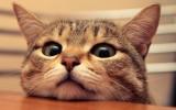 Удивленный кот фото картинка фотография