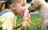 Девочка и щенок едят мороженое фото