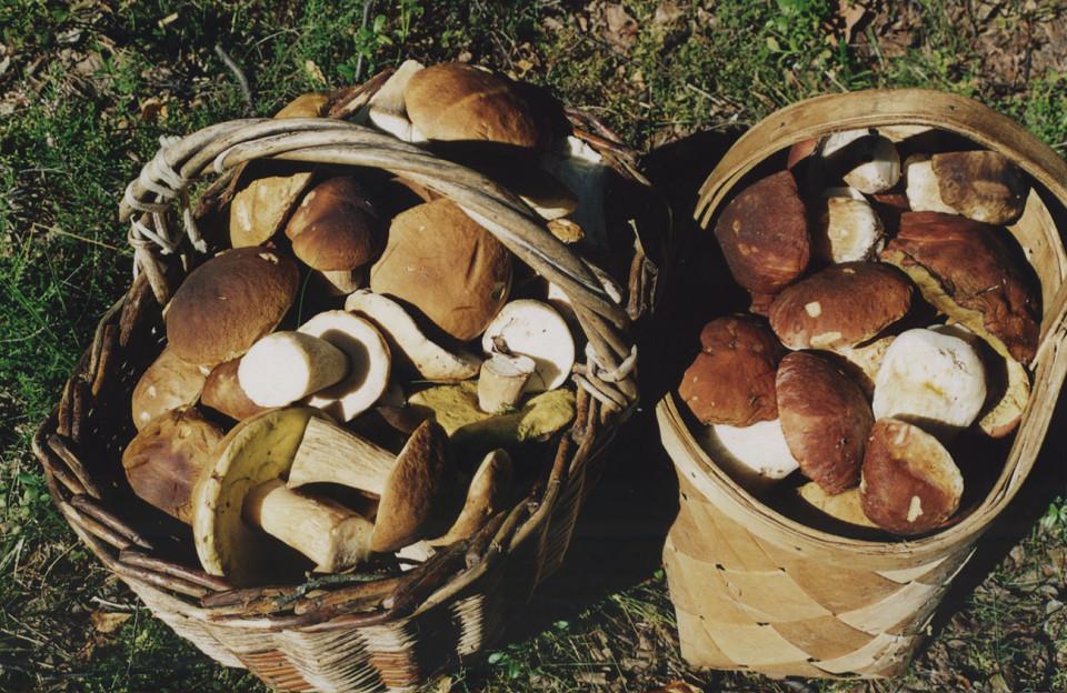Лукошко белых грибов фото