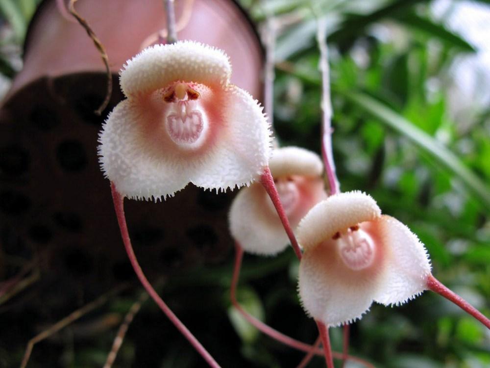 Фото цветов редкие виды