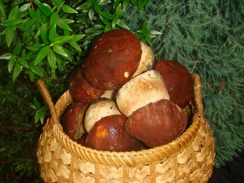Белые грибы в корзинке фото