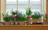 Цветы на подоконнике фото