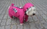 Собака в комбинезоне фото