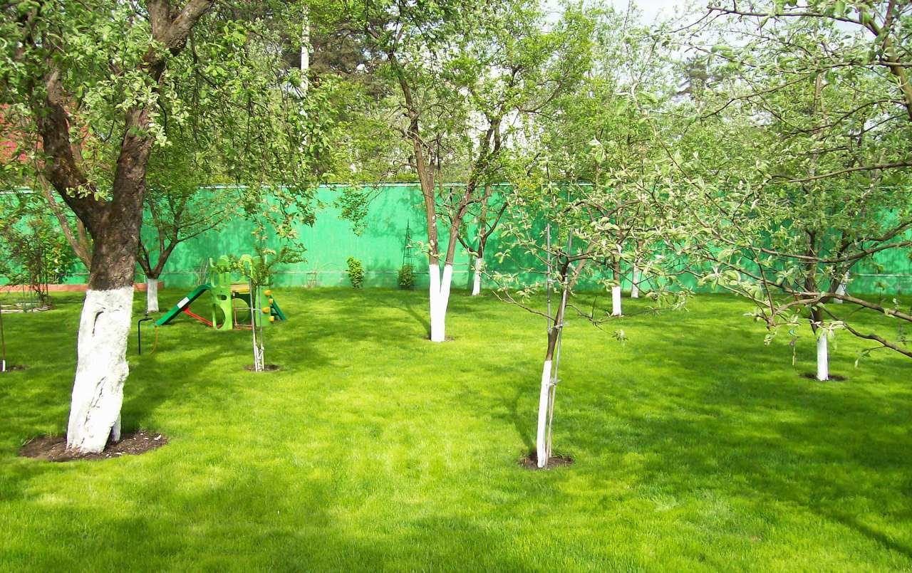 Можно ли сажать плодовые деревья в огороде 65