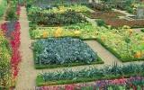 Что выращивать на даче?
