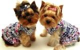 Аксессуары для маленьких собак