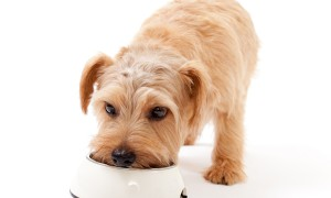 Чем-кормить-кастрированную-собаку