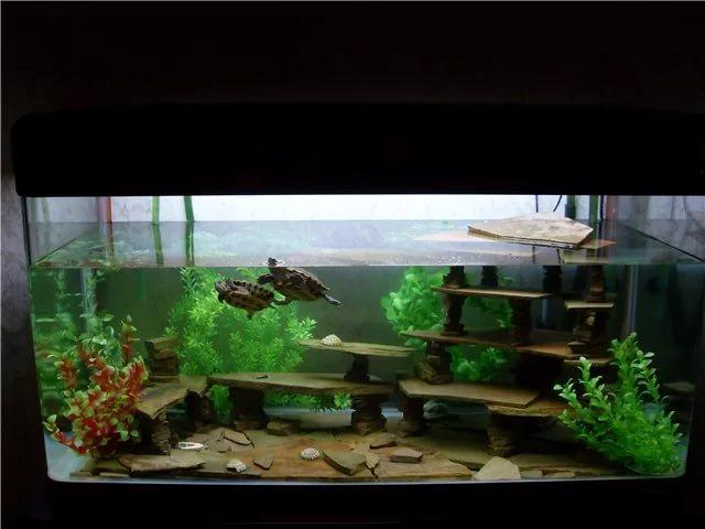 Какие растения можно сажать в аквариум к красноухим черепахам 27